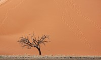 Dead tree in front of giant sand dune, Sossusvlei National Park, Namibia