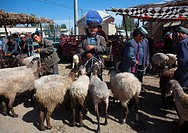 Sheeps For Sale In Serik Buya Market, Yarkand, Xinjiang Uyghur Autonomous Region, China