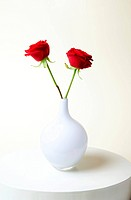 Close-up of two red roses in white vase