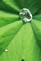 Water droplets on a leaf.