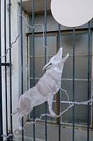 USA, Arizona, Tucson. Modern coyote window with full moon, San Xavier del Bac Mission