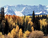 Colorado, San Juan Mountains, Autumn colors of Aspen Trees (Populus tremuloides) below snow capped Rocky Mountains. (Large format sizes available)