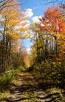 USA, Maine, Bar Harbor. Path with beautiful fall colors of red and gold foliage.