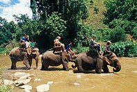Western tourists riding elephants in the Mae Taeng River