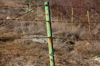 surrounded by rusted barbed wire fence of thorns