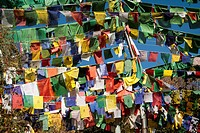 Tibetan prayer flags at the domicile of the Tibetan exile government, McLeod Ganj, Dharamsala, Himal Pradesh, India, Asia
