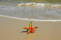 colorful starfish sitting on beach