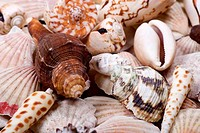 Shellfish shells