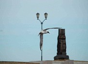 The seagull and lantern