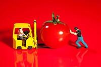 Tiny Workmen Loading Cherry Tomato