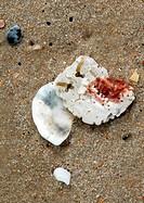 Shells 46