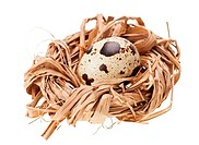 One quail eggs in the straw nest