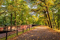 Footpath in park during the autumn