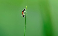 (150506) -- SHANGHAI, May 6, 2015 () -- Photo taken on May 6, 2015 shows an insect on a plant at Minhang Sports Park in east China's Shanghai. This We...