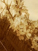 Vintage Spring Blossom