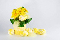 Easter eggs and primula on a white background