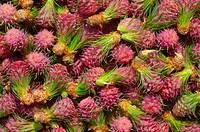 Texture flower cones