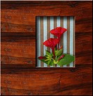 background wooden frame with fresh flowers