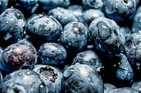 Fresh Blue Berries