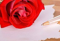 rose and pen