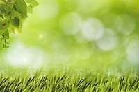 Abstract natural backgrounds with green grass, birch foliage and beauty bokeh.