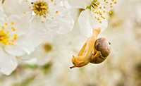 snail on the flowering tree