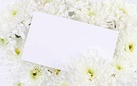 White chrysanthemum flowers bouquet with blank white card. Copy space for text. Closeup