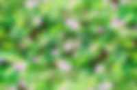 blur natural green background and backdrop