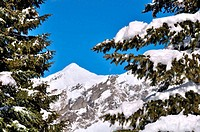 snow on branch of fir