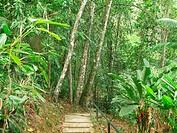 Premontane rainforest, Paracotos, Venezuela