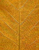 The Leaf texture grunge style