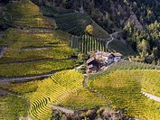 Viniculture near Klausen in South Tyrol during autumn. Europe, Central Europe, South Tyrol, Italy