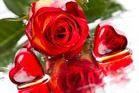 Valentine's day and rose