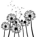 black vector dandelions