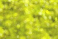 defocussed summery foliage