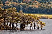 Muckross Lake and Killarney National Park, Muckross, Co. Kerry, Ireland.