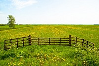 agricultural landscape with wooden fence in Friesland, Holland