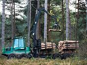 UK, England, Surrey, Forest pines logging.