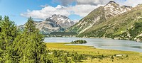 Summer landscape, Lake Sils, Upper Engadin, Switzerland.