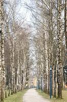 Birch Trees sourrounding a walkway in the Botanica Recreational Area in Bad Schallerbach, Austria