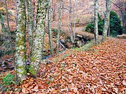 Path to Casillas in the Sierra de Gredos. Avila. Castilla Leon. Spain. Europe.
