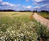 Country road. Poland. Suwalski region
