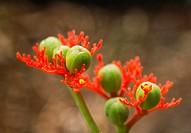 USA, Hawaii, Honolulu. Close-up of unusual tropical flower.