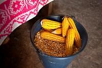 Yellow organic corn in Pomuch, Hecelchackan municipality, Yucatan State, Mexico.