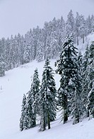 Winter forest near Mt Ashland, Rogue River National Forest, Oregon.