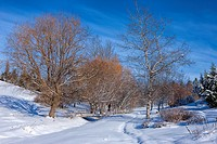 A scenic winter image of trees in a snowy field in Moscow, Idaho.