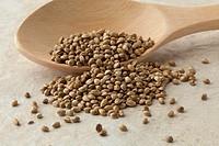 Unshelled hemp seeds on a wooden spoon close up.