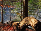 A weathered log looks out over a stream from atop a hillside, Pennsylvania, USA.