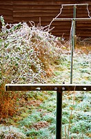 clothes line covered with frost.