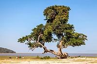 Lake Ziway, Ethiopian Rift Valley, Ethiopia.